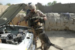 psovodi v afgánistánu