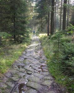 Dolní Žleb Cesta